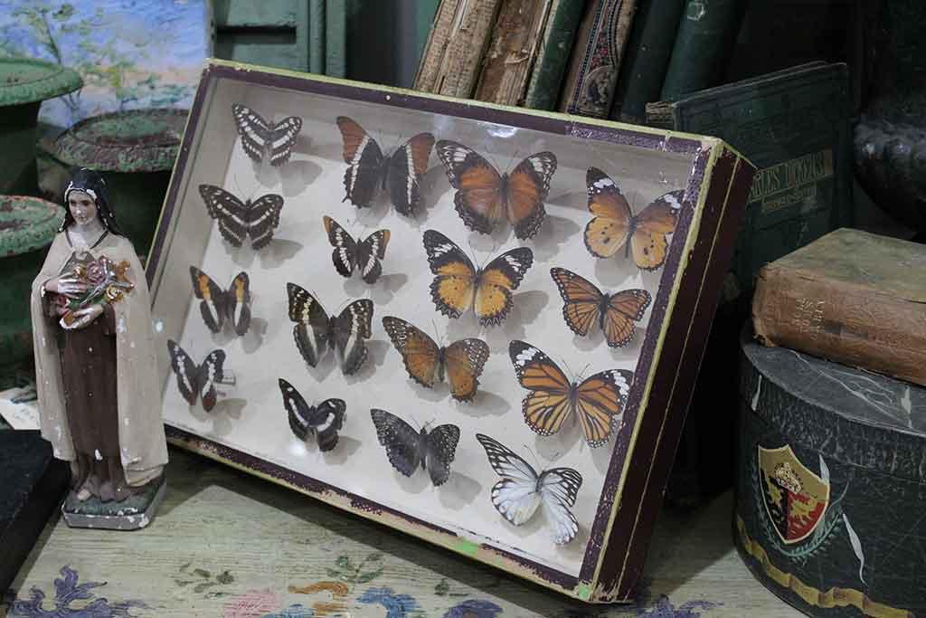 Butterfly Case
