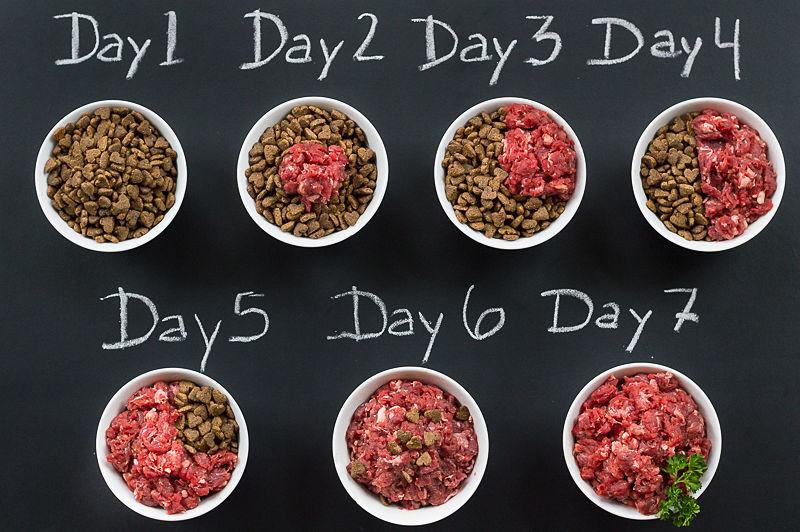 raw pet food diet recipes
