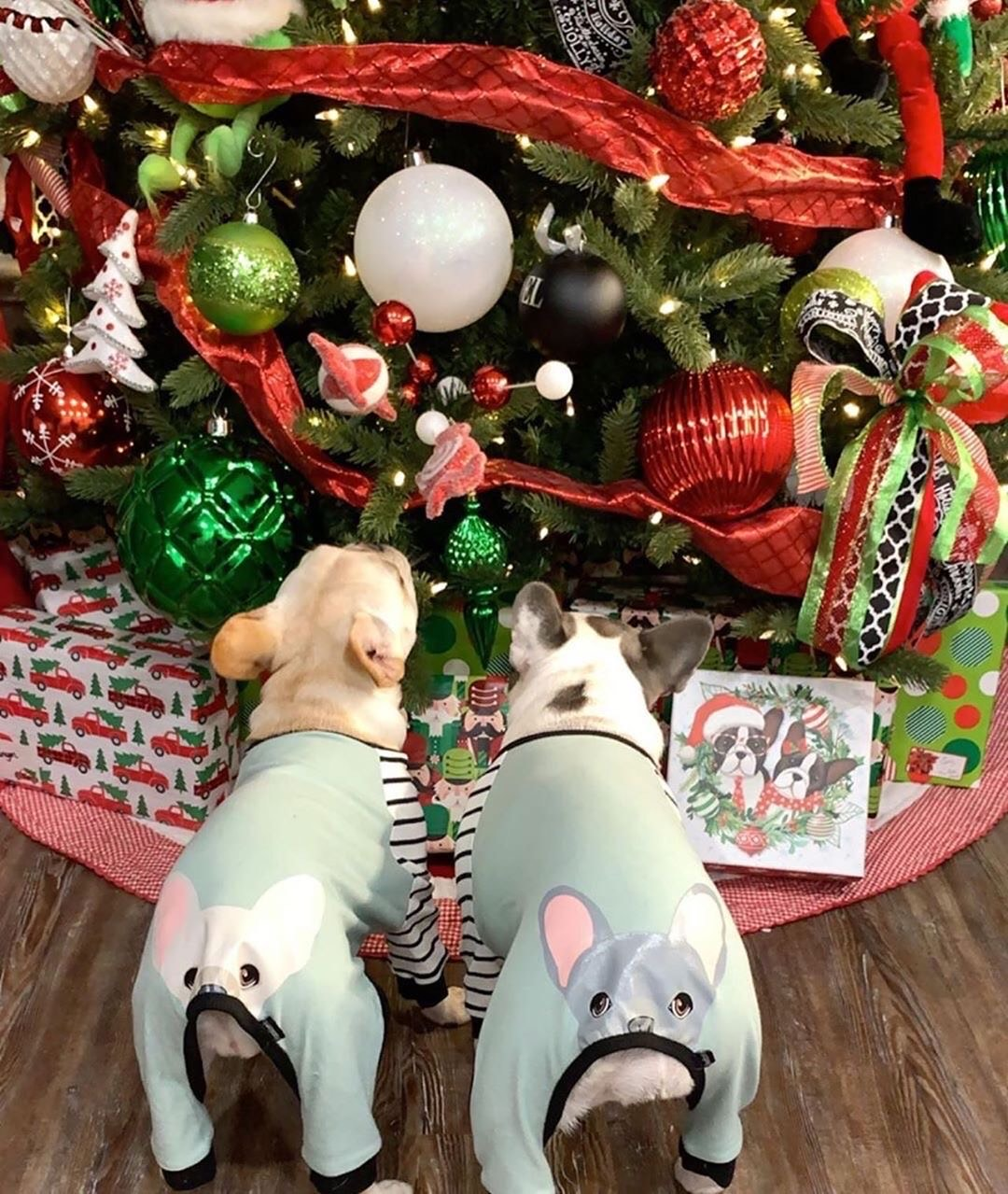 two frenchie dogs wearing frenchiestore specialty dog pajamas under a christmas tree