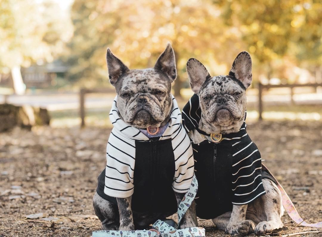 Vêtements Frenchie bio
