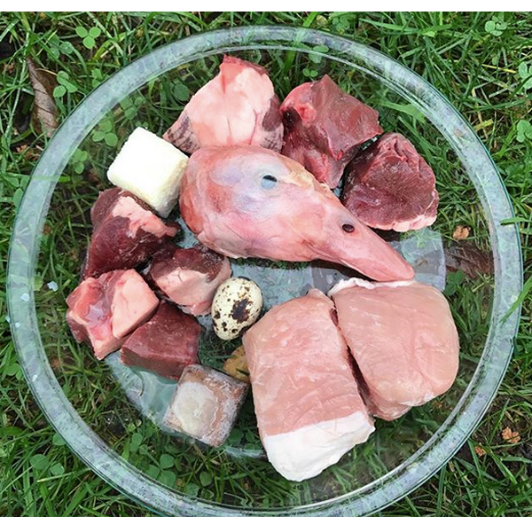 #15 raw Frenchie food meal suggestion  Duck head, beef heart, pork chop boneless, quail egg, beef liver cube, raw goats milk, and sardine/salmon oil