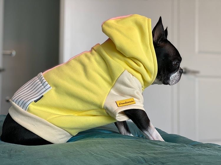 Boston Terrier organic dog clothes