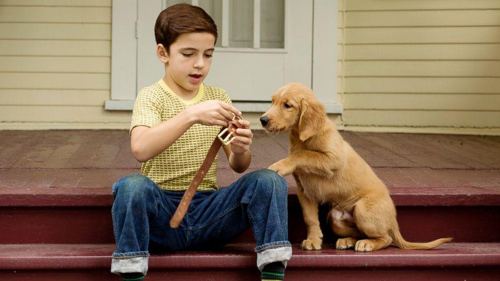 Der Zweck eines Hundes