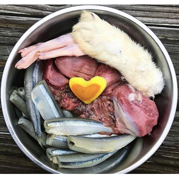 Raw food for your Bulldog meal idea Pasture beef kidney, rabbit liver, turkey gizzards, smelt, duck foot, rabbit foot, coconut oil + turmeric heart