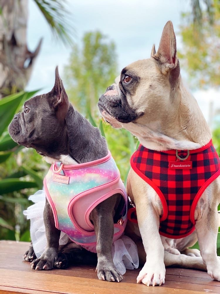 French Bulldog Duo Reversible Health Harness by Frenchiestore