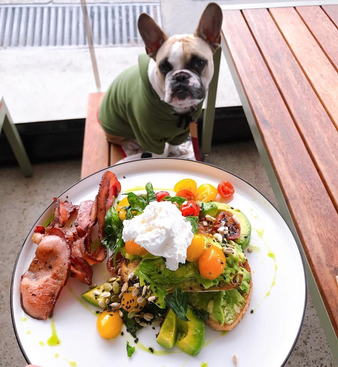 Frenchie best dog-loving restaurants in Washington.