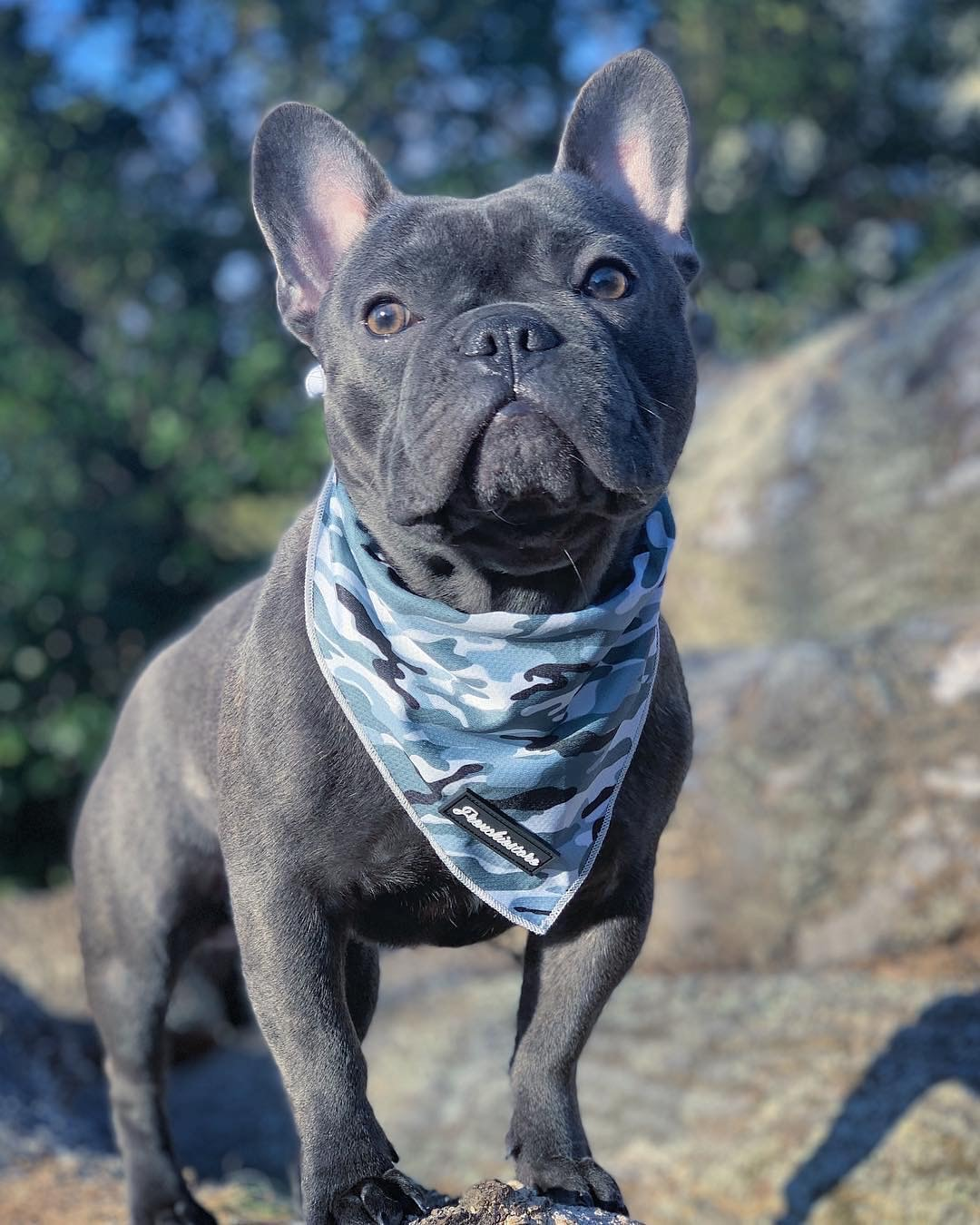 Frenchiestore Dog Cooling Bandana | Grey Ultimate Camo