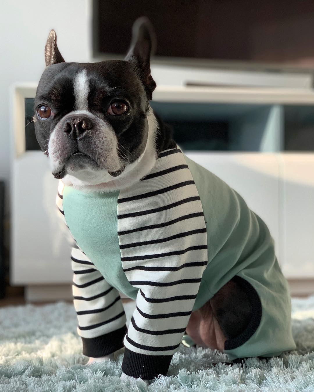 Pijama de perro Boston Terrier