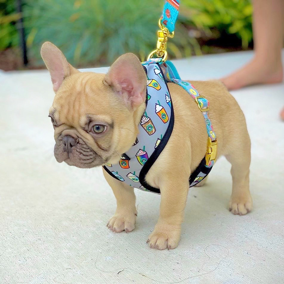 French Bulldog Harness | Versatile Health Harness | Mint StarPup