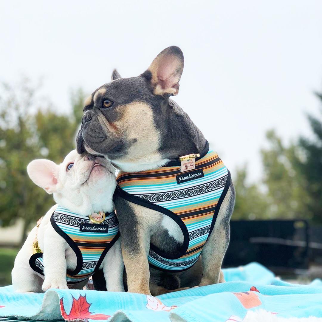 Manta para perros Frenchie