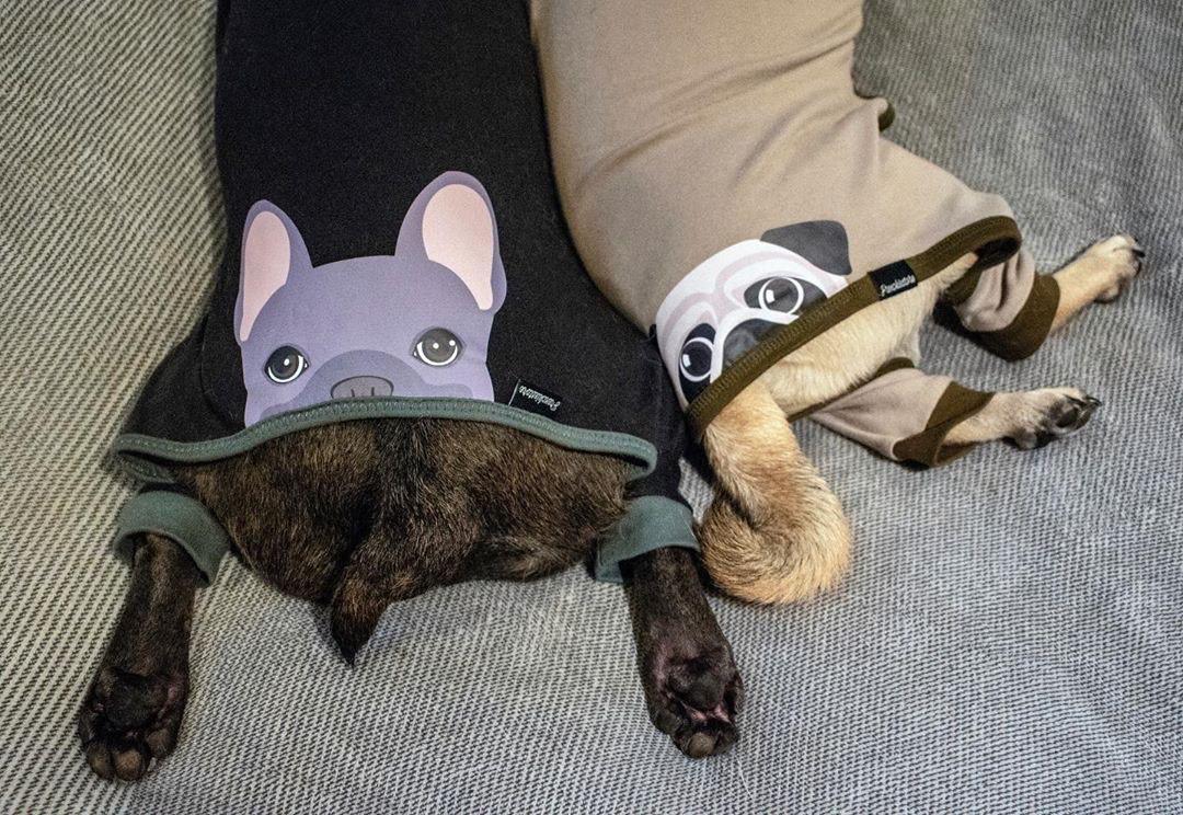 Carlin et un Frenchie portant un pyjama pour chien fait main personnalisé de Frenchiestore