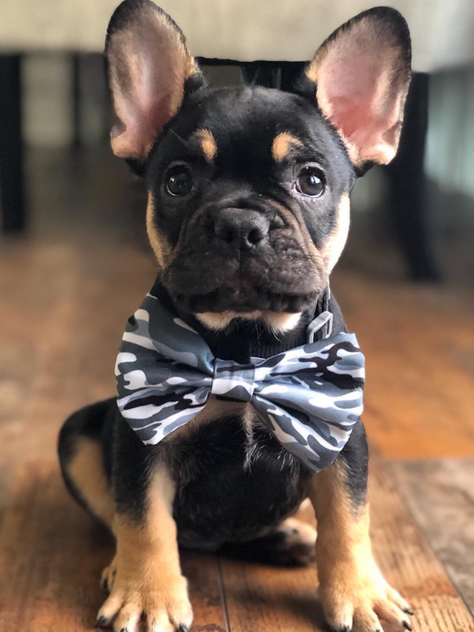 Frenchiestore perro Bowtie | Blue Ultimate Camo