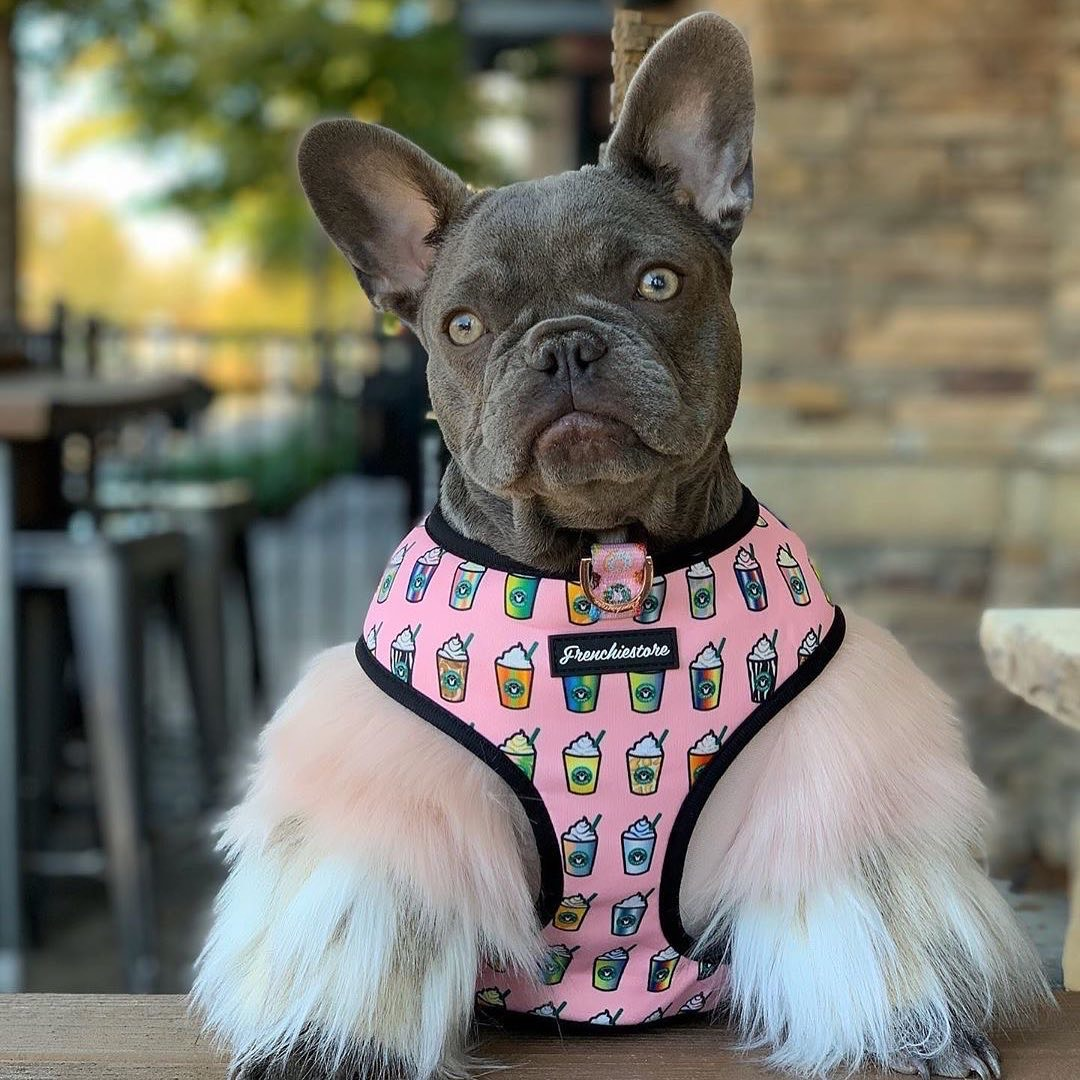 French Bulldog dog harness