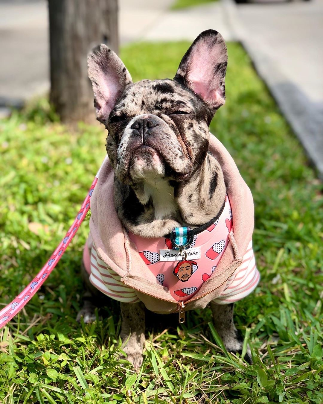 https://frenchiestore.com/collections/french-bulldog-versatile-health-harness/products/french-bulldog-harness-versatile-health-harness-frenchie-love