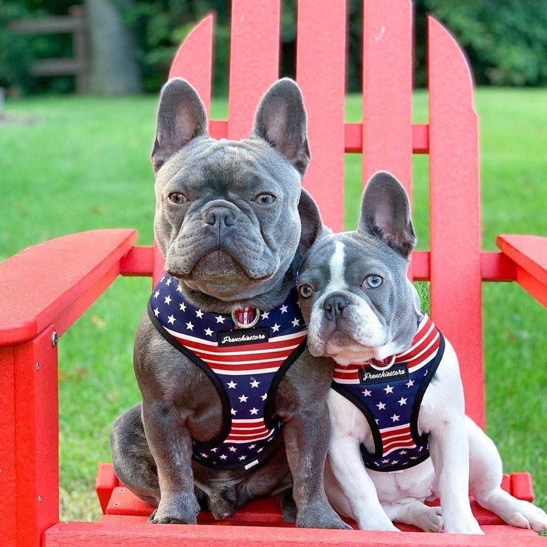 Arnés Bulldog Francés | Arnés de salud versátil | Todo americano