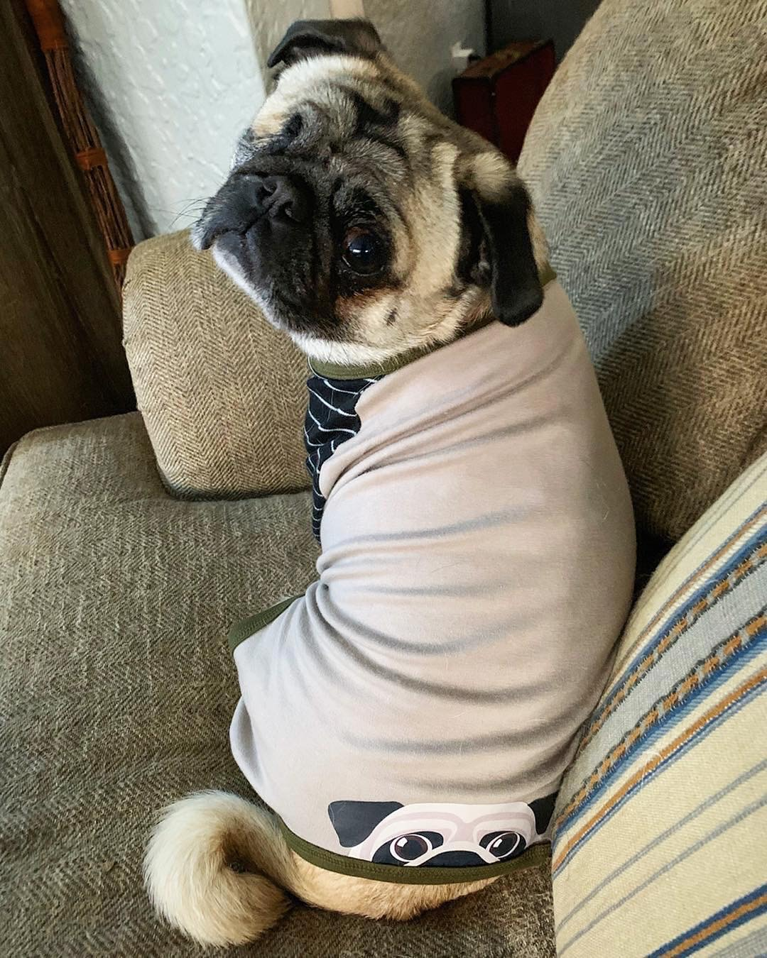 How To Houseproof For A New Pug Puppy