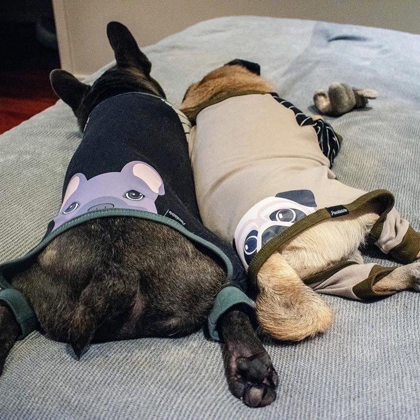 Pijama de perro Pug