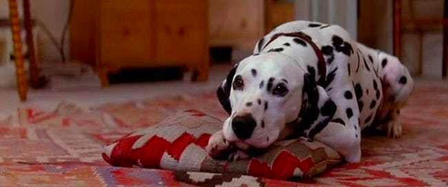 101斑點狗電影