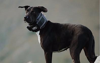 Dog Rip Collars - Game Gear