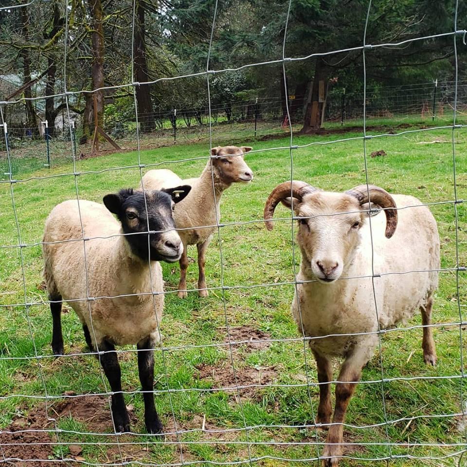 Cedar Dell Forrest Farm