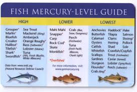 Top 15 Low And High Mercury Fish Safe For Kids And