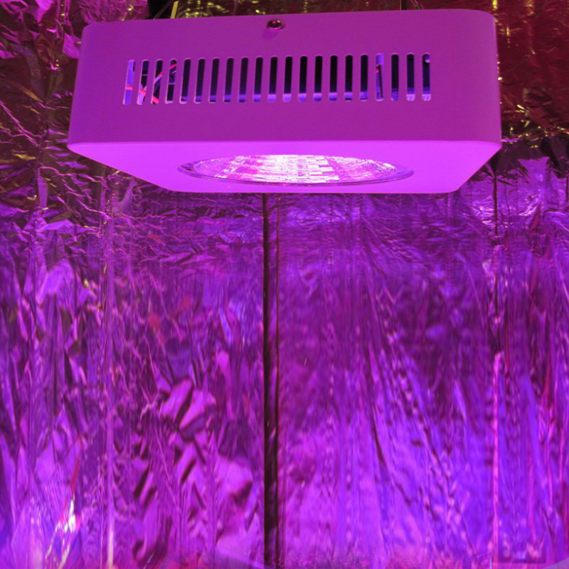 The Best LED Grow Lights Online In Australia – The Hippie House