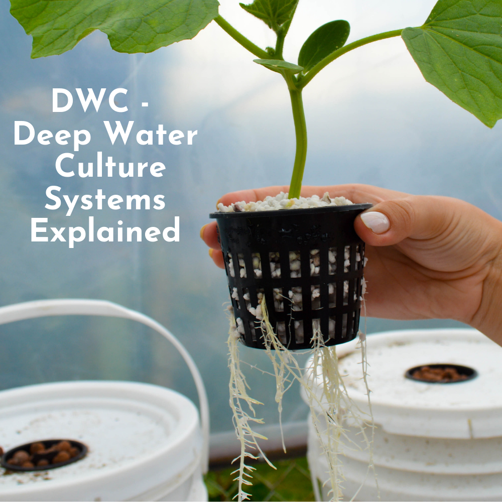 DWC Systems Tutorial - Main Image