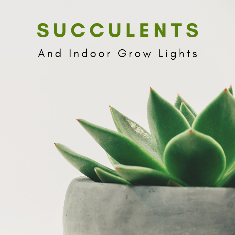 Choosing The Right Grow Light For Succulents