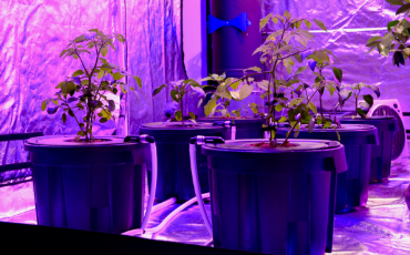 DWC System in grow tent