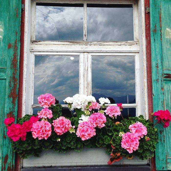 Blumen vor Holzfenster