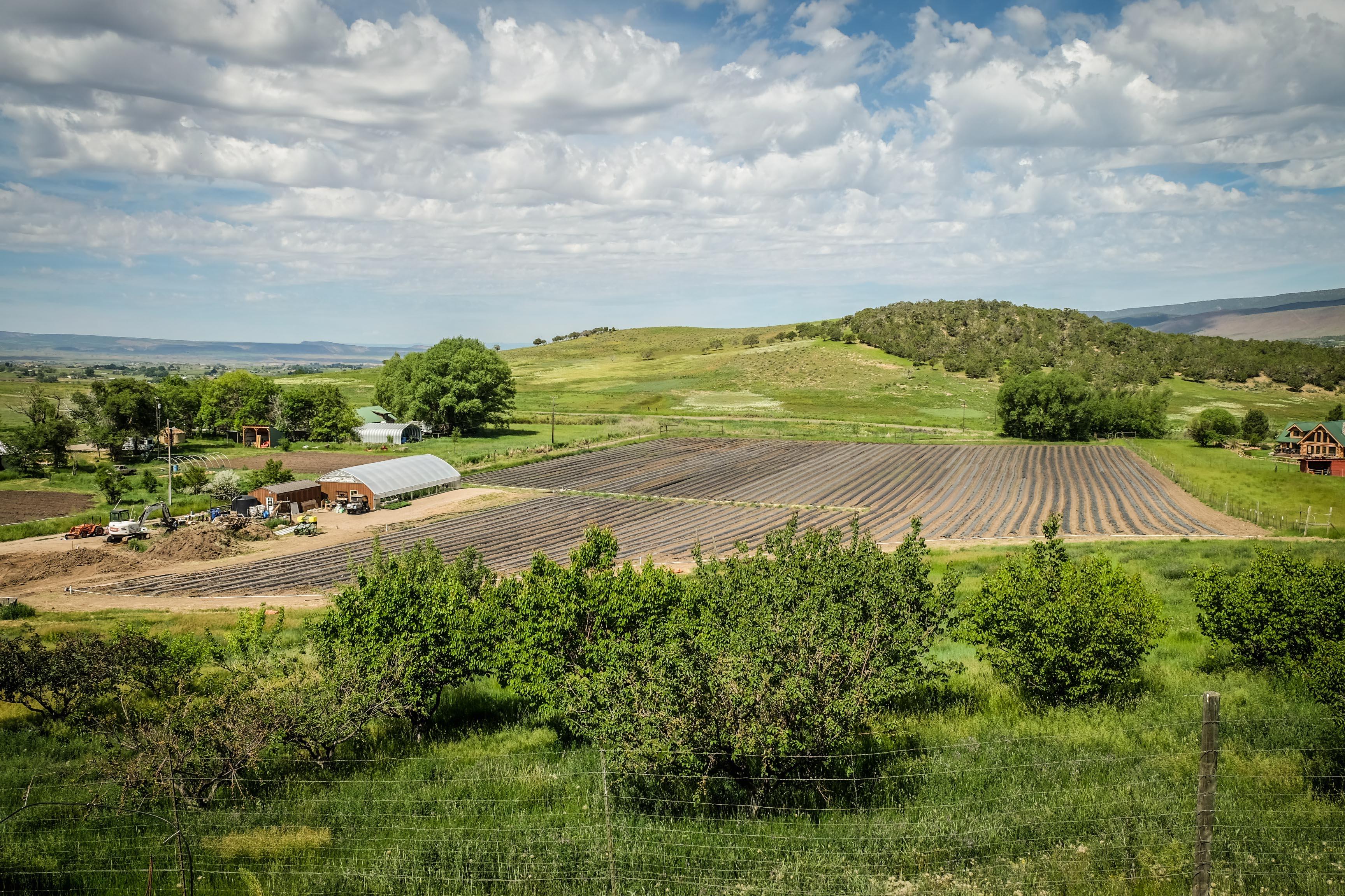 curt's farm