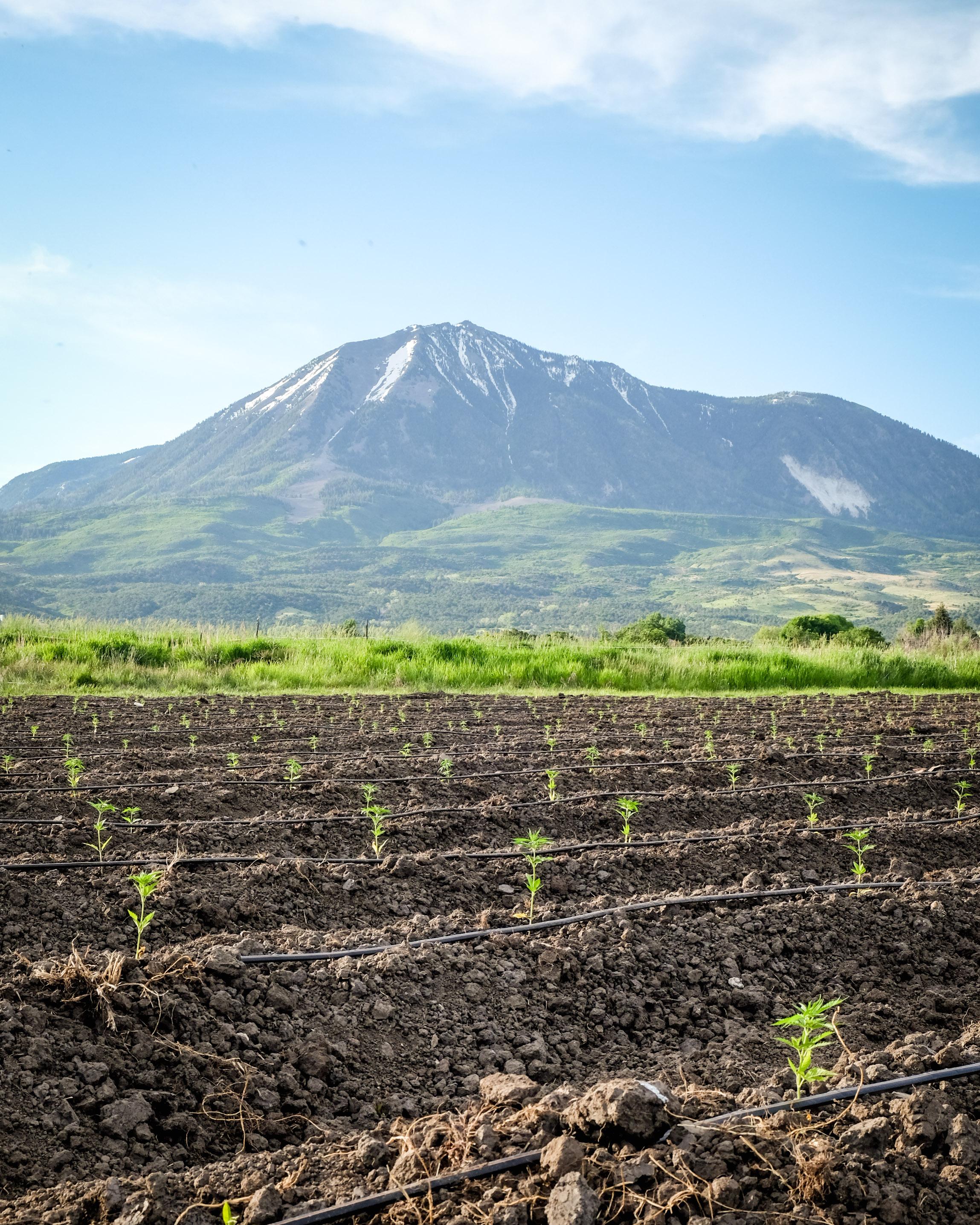 practicing biodynamic farming