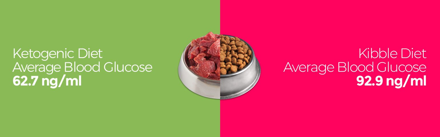 Average blood glucose kibble and low carb keto dog food