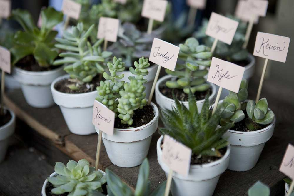 DIY Wedding Favor Succulents