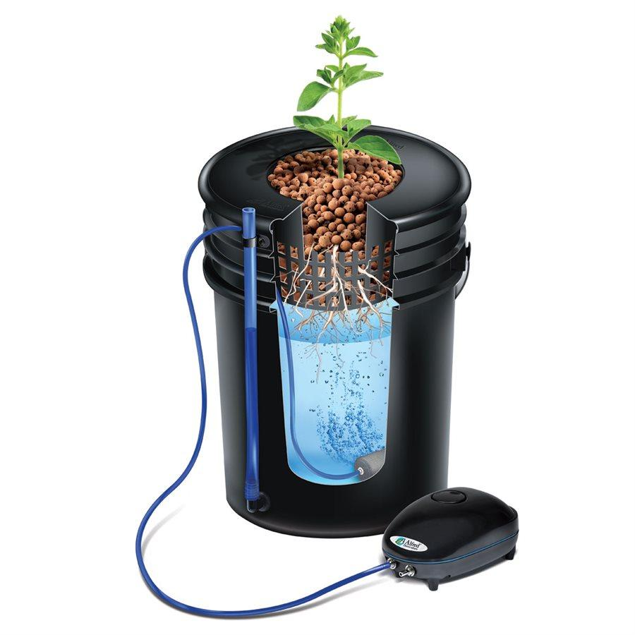Deep Water Culture (DWC) With ALFRED Plant System – Indoor