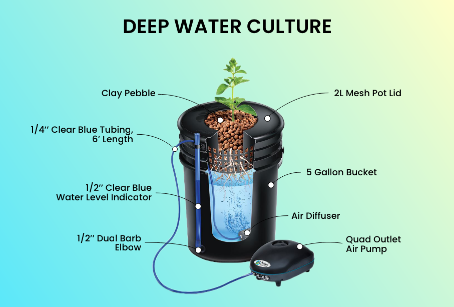 Deep Water Culture With Alfred Plant System