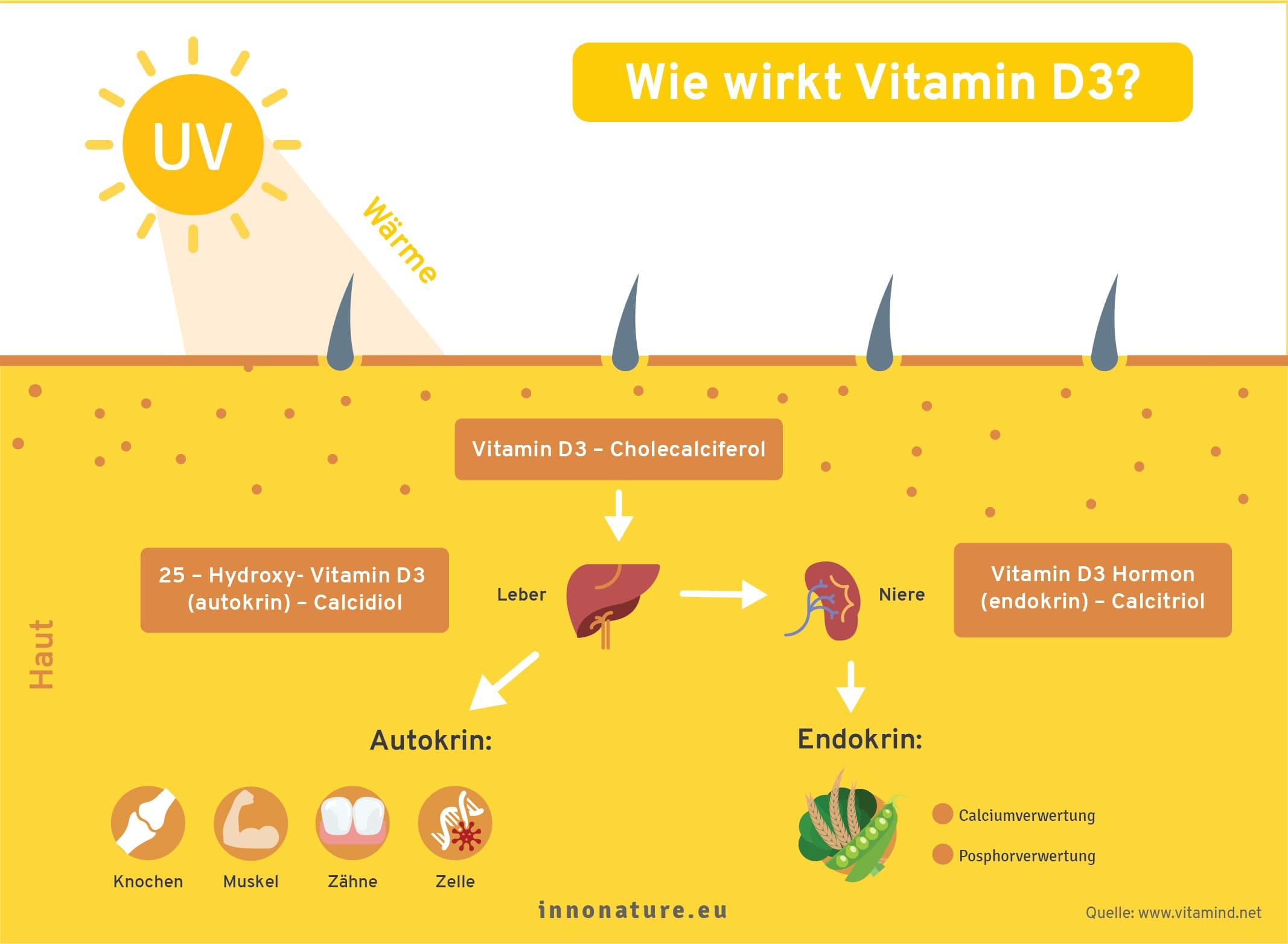 Grafik: Wie wirkt Vitamin D im Körper