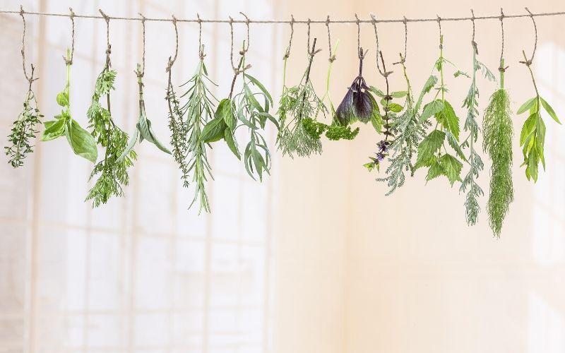 Unterschiedliche Kräuter, wie Minze, Basilikum und Thymian hängen einzeln an Jutebändern an einer Leine.