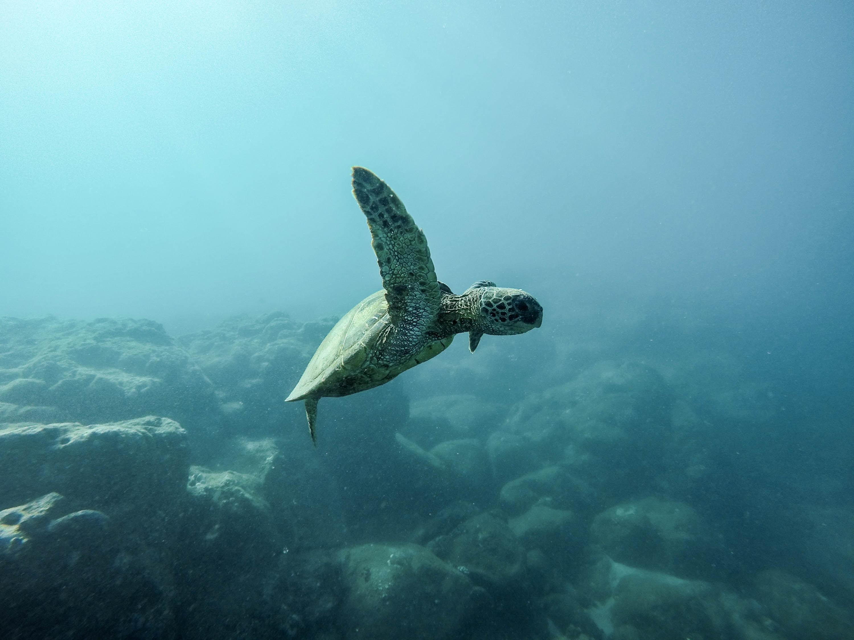 ocean polution