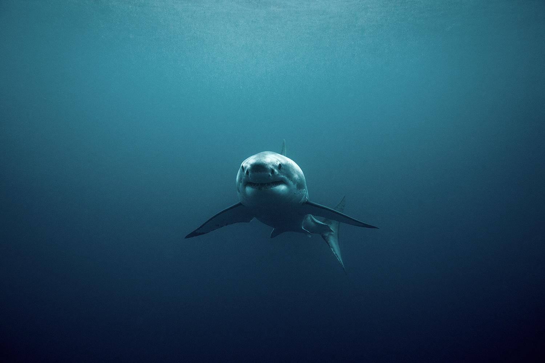 girl swimming alone in dark sea