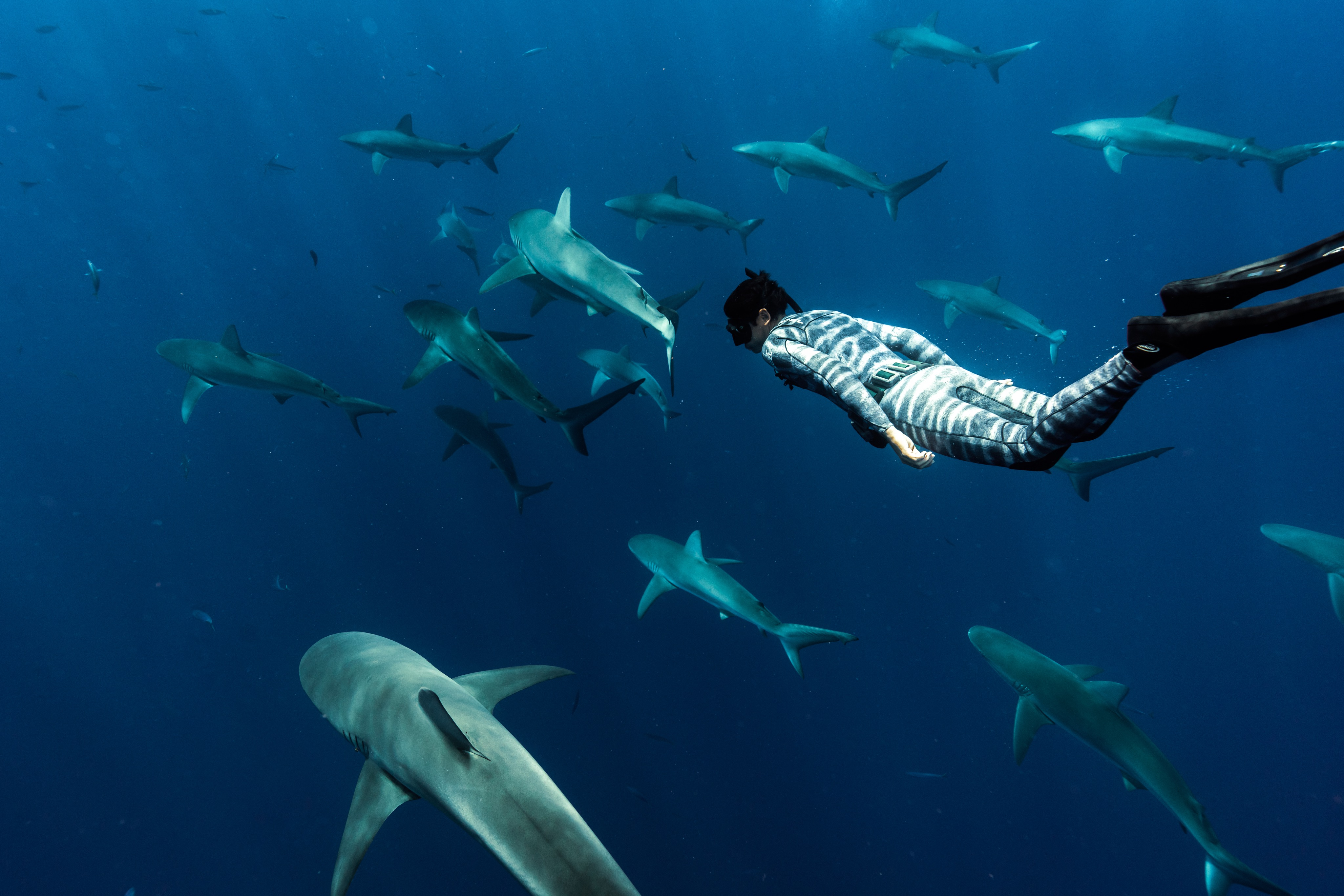 person swimming in ocean among dozens of sharks