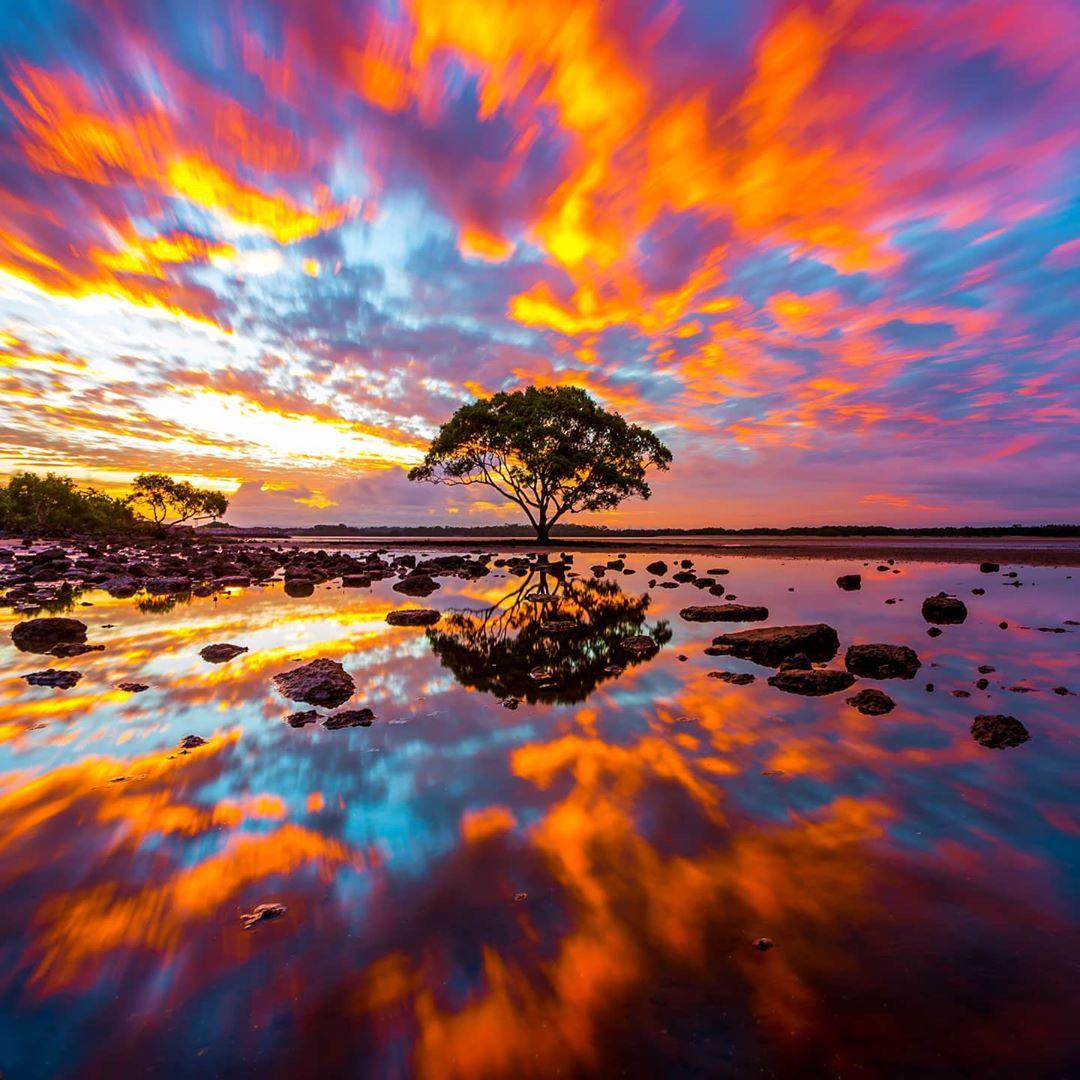 beautiful sunset surrounding tree in distance
