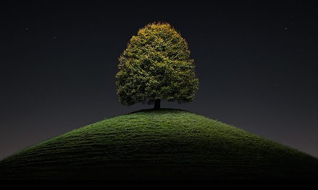 tree on top of grassy hill