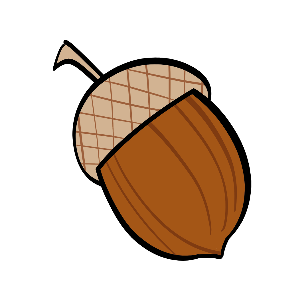 illustrated acorn