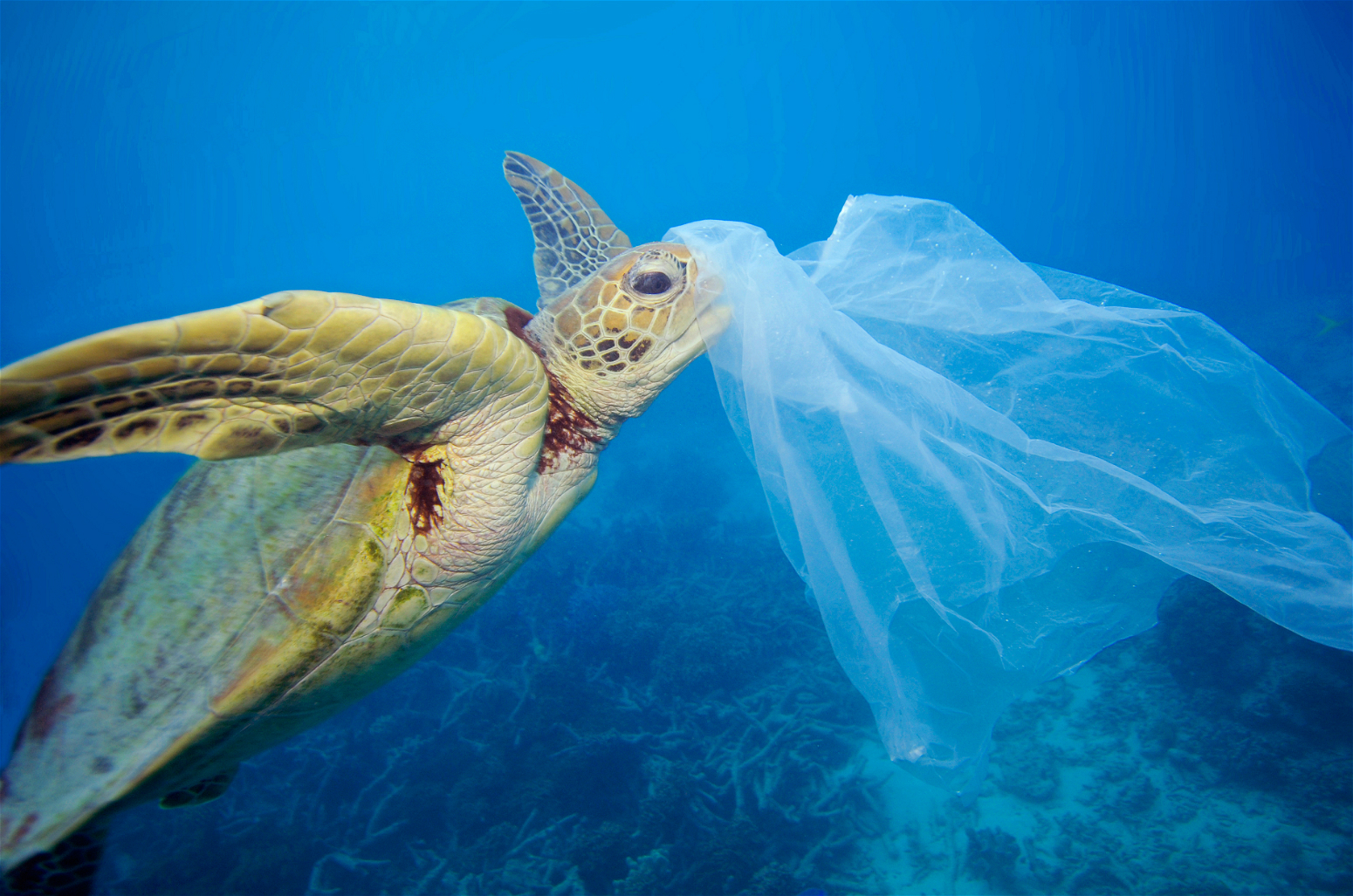 turtle caught in plastic bag