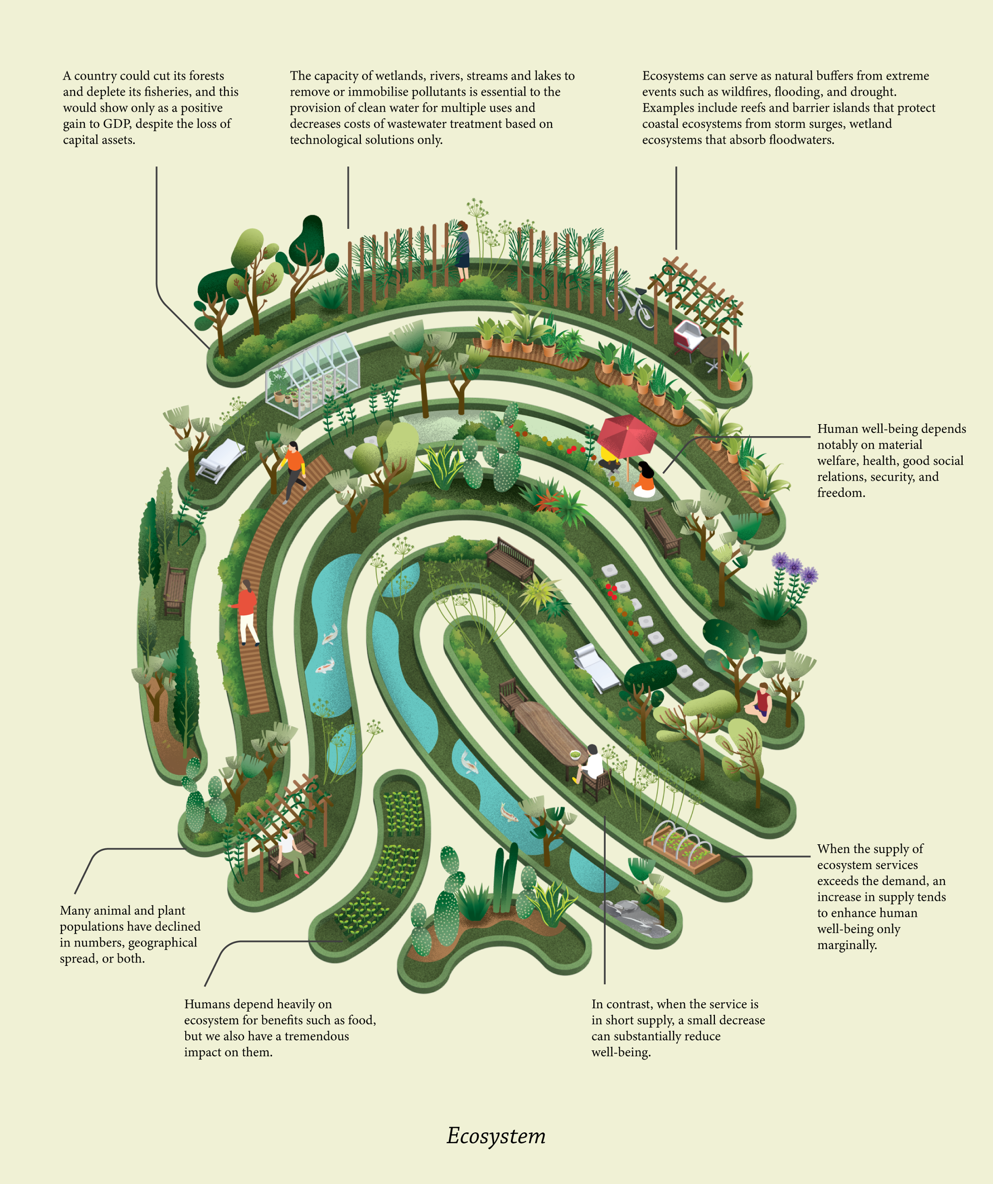 illustrated image full of curving rows seemingly interconnected with lots of trees and greenery inside them, along with ecosystem facts on the sides