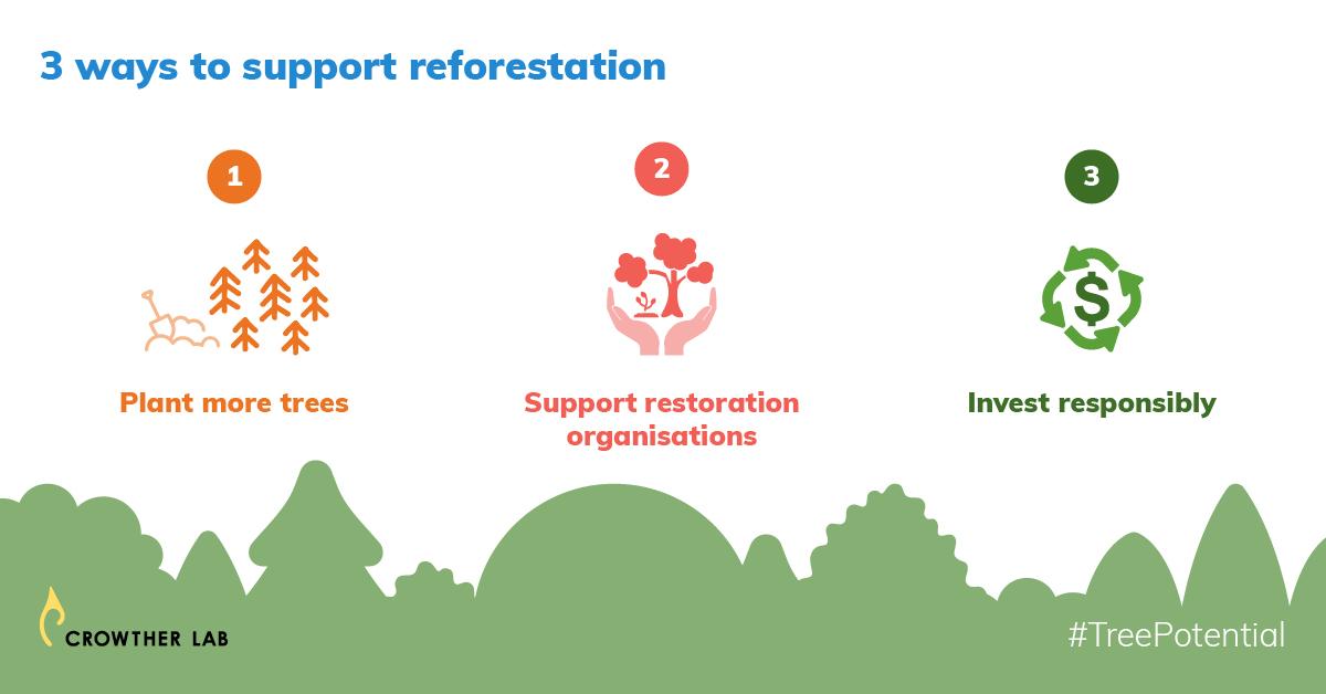 presentation slide of 3 ways to support global reforestation
