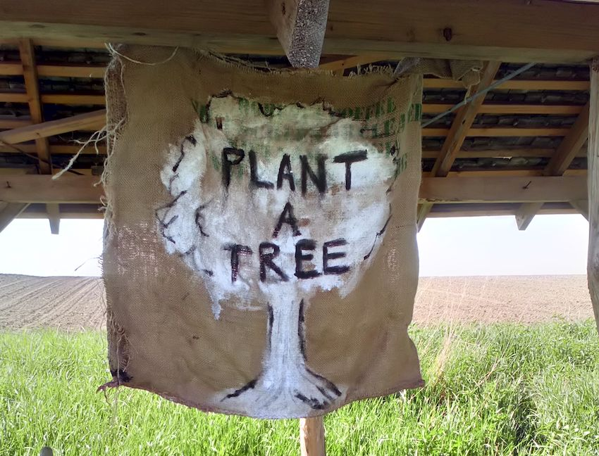 sign that says plant a tree