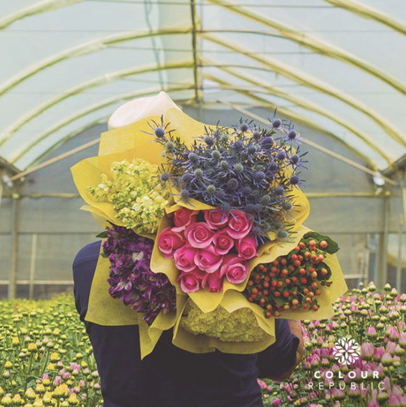 Pink, purple, multi-colored, and yellow bouquets being held by a person in a greenhouse