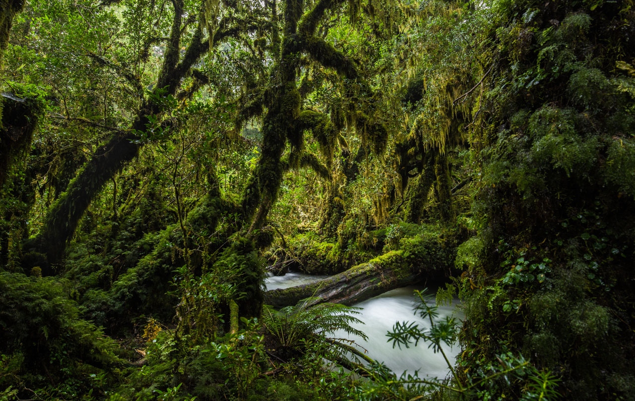 thick mossy forest and stream
